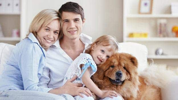 Wills & Trusts dog-young-family Direct Wills Herefordshire